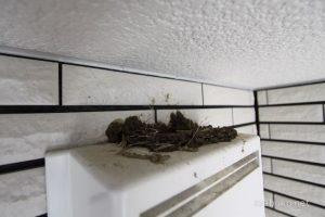 換気扇 鳥の巣