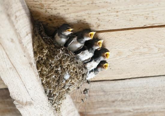 鳥の巣 対策